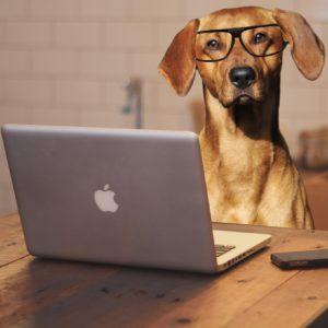 Dogsbody social media